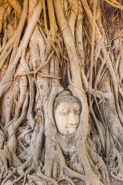 HMS3042852 Thailand, province of Phra Nakhon Si Ayutthaya, Ayutthaya, listed as World Heritage by UNESCO, Historical Park, Wat Mahathat