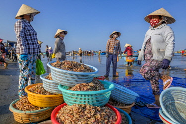 HMS2506652 Vietnam, South Central Coast region, Mui Ne fishing village, return from fishing
