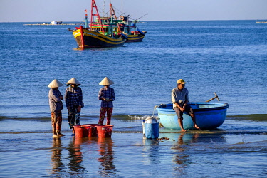 HMS3215772 Vietnam, Mui Ne, fishermen wifes sorting fishes in front of fishing port
