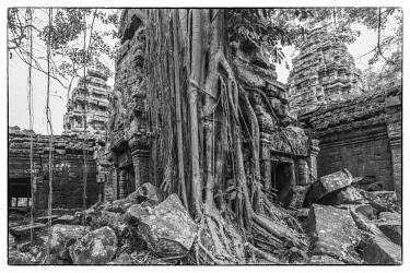 CM02213 Cambodia, Angkor, Ta Prohm, temple tree