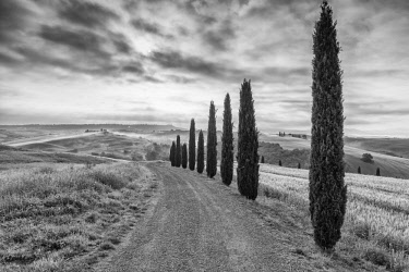 ITA13179AW Italy, Tuscany, Val D'Orcia, a row of cypress trees near to San Quirico d'Orcia