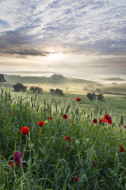 ITA13177AW Italy, Tuscany, Val D'Orcia, Belvedere house in mist at sunrise