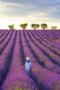 CLKMN92155 Valensole, Provence, France. Woman stading in lavender field (MR)