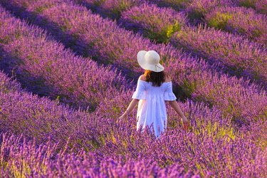 CLKMN92156 Valensole, Provence, France. Woman stading in lavender field (MR)