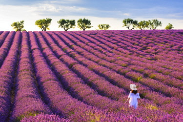 CLKMN92157 Valensole, Provence, France. Woman stading in lavender field (MR)