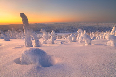 CLKMR86601 Frozen trees of Riisitunturi hill, Riisitunturi national park, posio, lapland, finland, europe.