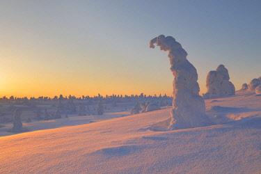CLKMR86636 Frozen trees of Riisitunturi hill, Riisitunturi national park, posio, lapland, finland, europe.