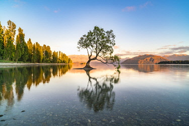 CLKFV89864 The lone tree in Lake Wanaka in the morning light. Wanaka, Queenstown Lakes district, Otago region, South Island, New Zealand.