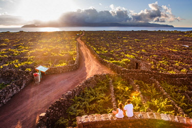 CLKFV89557 Two people admiring vineyards inside lava walls at Criacao Velha during sunset. Pico, Azores islands, Portugal