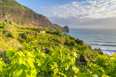 CLKFV91598 Vineyard and fruit plantations, with Clerigo Point in the background.  Faial, Santana municipality, Madeira Island, Portugal.