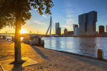 NLD0892AW Erasmus Bridge (Erasmusbrug) at sunrise, Rotterdam, Zuid Holland, Netherlands