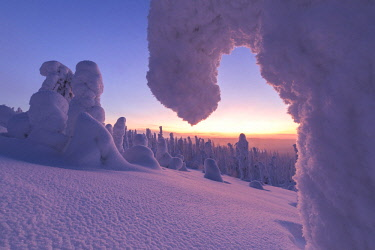 CLKRM88957 Sunrise on frozen trees, Riisitunturi National Park, Posio, Lapland, Finland