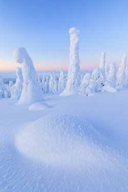CLKRM88982 Snow covered forest at dawn, Riisitunturi National Park, Posio, Lapland, Finland