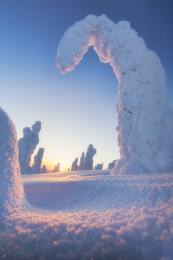 CLKRM88998 Shapes of frozen trees, Riisitunturi National Park, Posio, Lapland, Finland