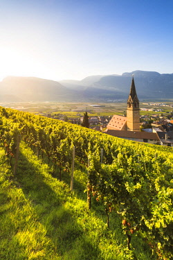 CLKMN86712 Termeno,Bolzano province,Trentino Alto Adige,Italy  Views of the vineyards and the church of Saints Quirico and Giulitta at dawn.