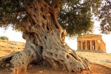 ITA13197AW Italy, Sicily, Agrigento, Valley of temples, Tempio della Concordia (temple of Concord)