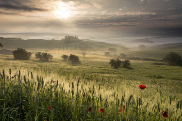 ITA13204AWRF Italy, Tuscany, Val D'Orcia, Belvedere house in mist at sunrise