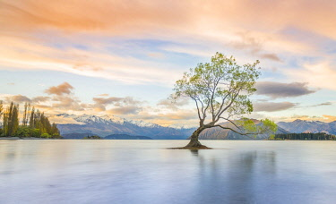 IBXMMW04487188 Sunrise, single tree standing in water, Lake Wanaka, The Wanaka Tree, Roys Bay, Otago, Southland, New Zealand, Oceania