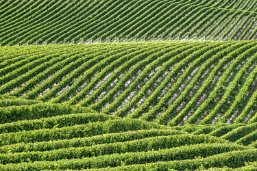 IBXROH04718433 Vineyards, Marlborough Region, South Island, New Zealand, Oceania