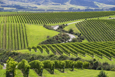 IBXROH04718434 Vineyards, Marlborough Region, South Island, New Zealand, Oceania