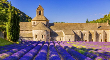 IBXKIP04720679 The Romanesque Cistercian Abbey of Notre Dame of Senanque set amongst flowering lavender fields, near Gordes, Provence, France, Europe