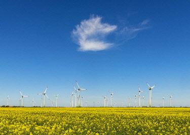 IBXCAG04725738 Wind turbines in rape fields in front of blue sky, Norderwoehrden, Schleswig-Holstein, Germany, Europe