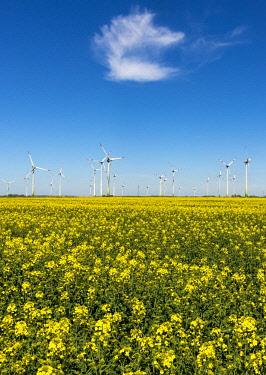 IBXCAG04725742 Wind turbines in rape fields in front of blue sky, Norderwoehrden, Schleswig-Holstein, Germany, Europe