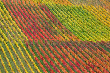 IBXTKE04597642 Vineyards, Baden-Wurttemberg, Germany, Europe