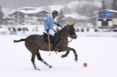 "IBLHJK02179197 Uwe Schroeder of team ""Tom Tailor"" riding through the snow, polo played on snow, polo tournament, Valartis Snow Polo World Cup 2012, Kitzbuehel, Tyrol, Austria, Europe"