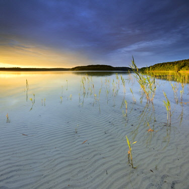 IBLAVI04727664 Great Furstensee lake with reeds, clear water with a wave structure in the sand, evening light, cloudy mood, Mueritz National Park, Furstensee, Mecklenburg-Western Pomerania, Germany, Europe