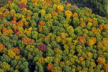 IBLBLO04250221 Autumn foliage, bright colours in autumn forest, Arnsberg Forest, Meschede, Sauerland, North Rhine-Westphalia, Germany, Europe