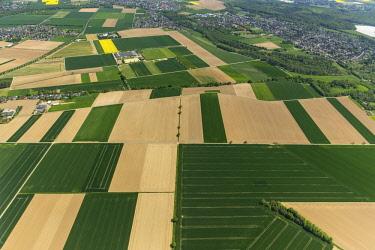 IBLBLO04367477 Aerial view, fields, cornfields, Grevenbroich, Lower Rhine, North Rhine-Westphalia, Germany, Europe