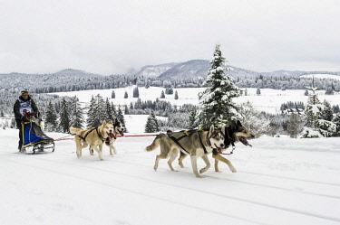 IBLDJS04096130 Sleddog World Championship 2015, Bernau, Black Forest, Baden-Wurttemberg, Germany, Europe