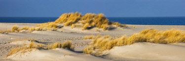 IBLPSA04079885 Dunes, Ellenbogen, Sylt, North Frisia, Schleswig-Holstein, Germany, Europe