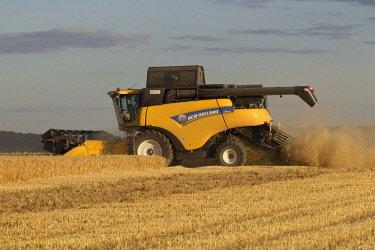 IBLTJE04716825 Harvester harvests barley on a field, grain harvest, Saxony, Germany, Europe