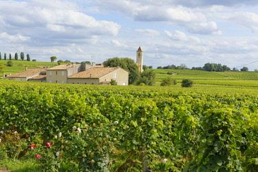 IBLCHG04072440 Vineyard Mazerat,  Saint-Émilion, Gironde, Aquitaine, France, Europe