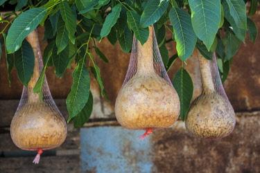 AM01331 Armenia, Areni,  wine gourds
