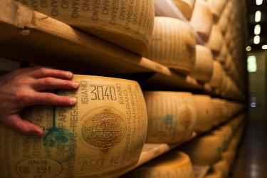 FVG029437 Parmigiano Reggiano, typical italian cheese, Parma, Emilia Romagna, Italy