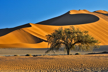 AF31HLL0050 Africa, Namibia, Sossusvlei Dunes in the Morning Light