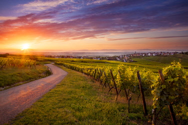 EU09BJN2017 Sunrise over vineyards surrounding Zellenberg along the Route des Vins, Alsace, Haut-Rhin, France