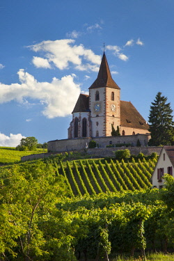 EU09BJN2023 Eglise Saint-Jacques-le-Majeur stands over the vineyards in Hunawihr, Alsace, Haut-Rhin, France