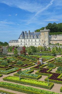 EU09JEN0289 Kitchen garden, Chateau de Villandry, Loire Valley, France