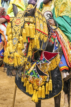 NGR1022 Nigeria, Kano State, Kano. A Hausa horse adorned in ornate regalia.