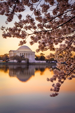 US09BJN0109 Cherry blossoms and the Jefferson Memorial at dawn in Washington DC, USA
