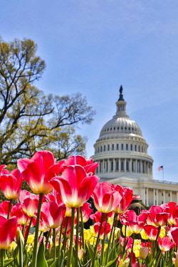 US09HLL0037 Usa, Washington D.C., United States Capitol