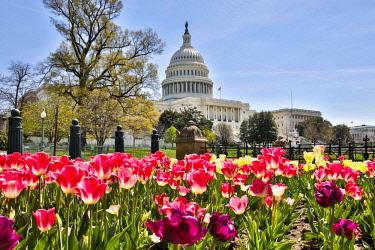US09HLL0038 Usa, Washington D.C., United States Capitol