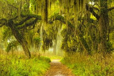 US10AJE0580 Footpath beneath live oaks draped in Spanish moss at sunrise, Circle B Bar Reserve, Polk County, near Lakeland, Florida.