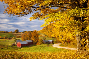 US46BJN0082 Orange and Yellow Maple Trees at dawn over the Jenne Farm near Woodstock, Vermont, USA