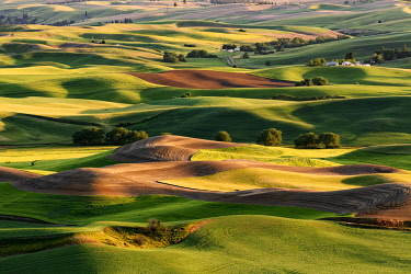 US48AJE0164 Expansive view of Palouse farming region of Eastern Washington State from high atop Steptoe Butte, USA