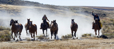 US51HLL0081 Usa, Wyoming, Shell, The Hideout Ranch, Ranchers Driving the Horses (MR, PR)